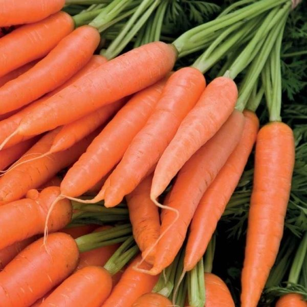 carote9